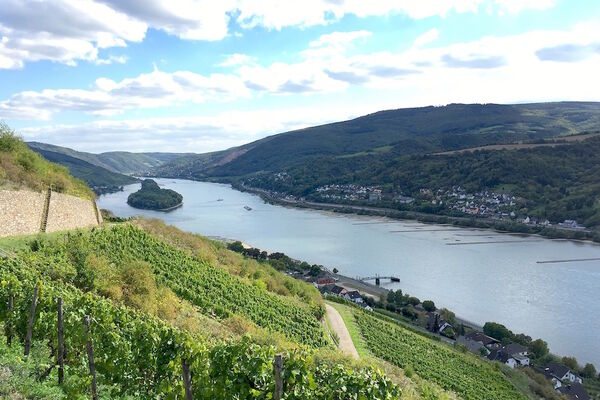 The Rheingau is back!