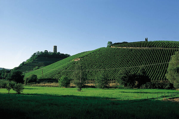 GREAT VINEYARDS... GREAT WINES only originate in GREAT SITES