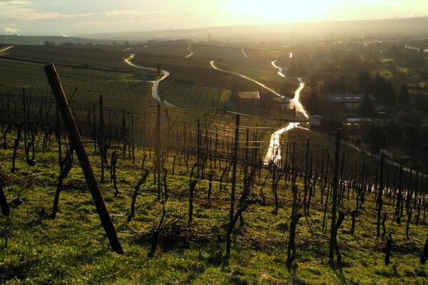 The Pruning at Weingut Robert Weil